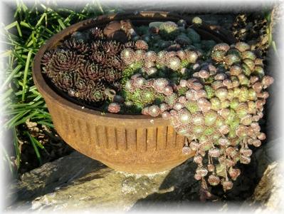 drum-planter.jpg