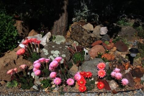 cacti_2009A